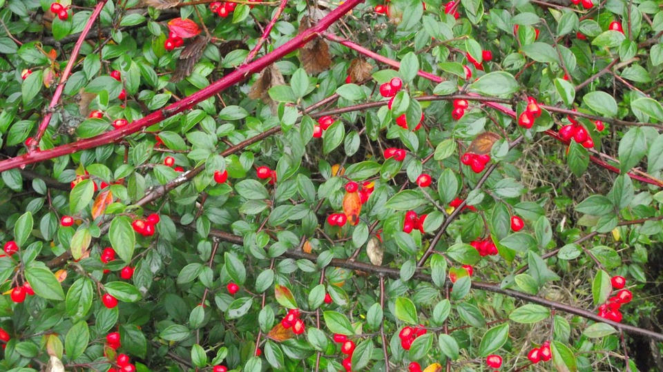 The Murta :  More than an antioxidant…